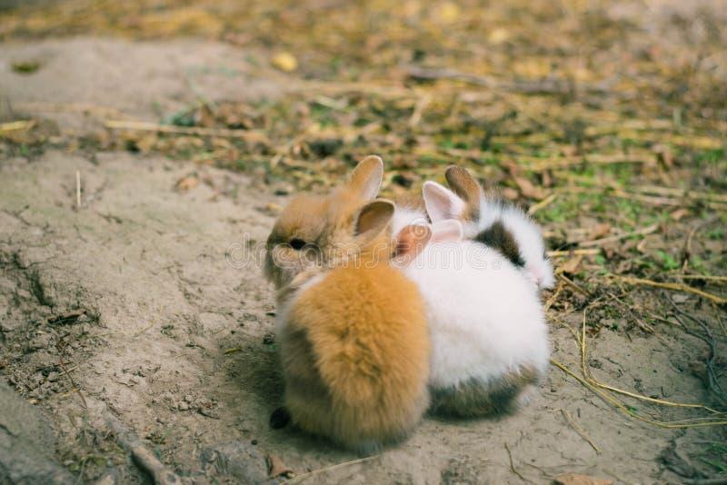 conejos Diseño del arte de pequeños conejitos lindos en el parque zoológico fotos de archivo
