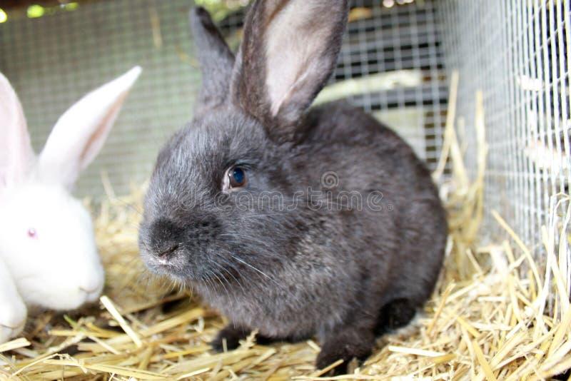 Conejos en jaula fotos de archivo libres de regalías