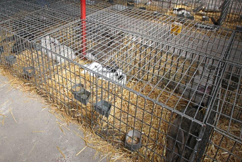 Conejos en jaulas imagenes de archivo