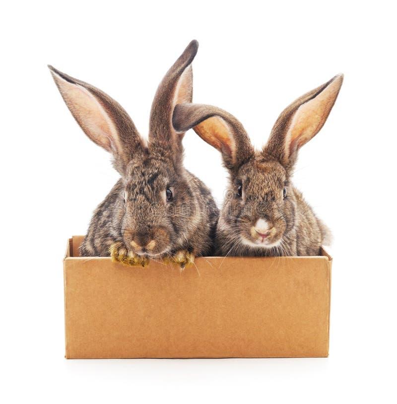 Conejos en la caja fotos de archivo