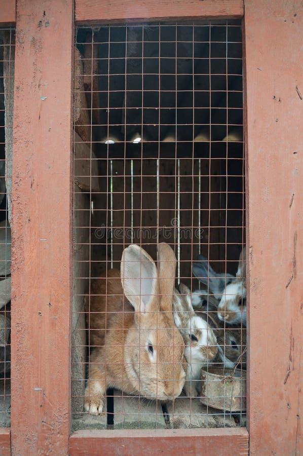 Conejos en una jaula fotografía de archivo libre de regalías
