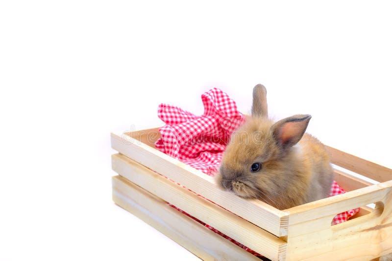 Conejos en zanahorias, pepinos, tomates y barriles de madera de los pisos en pisos de madera foto de archivo