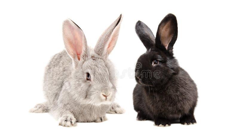 Conejos grises y negros que se sientan junto fotos de archivo