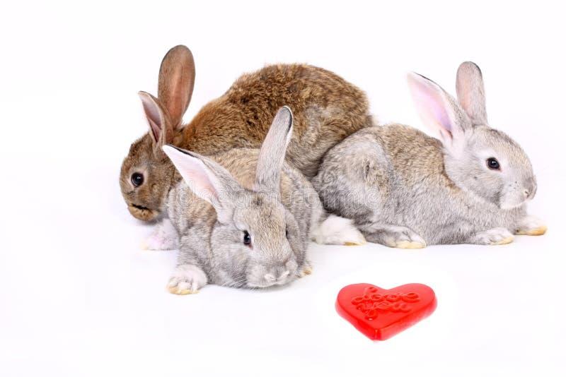 Conejos jovenes fotografía de archivo libre de regalías