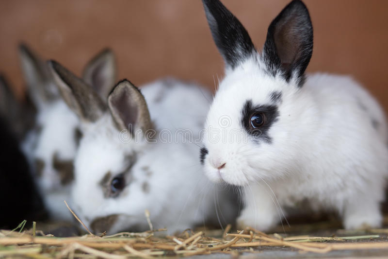 Conejos jovenes que alimentan la paja en la jaula imagen de archivo libre de regalías