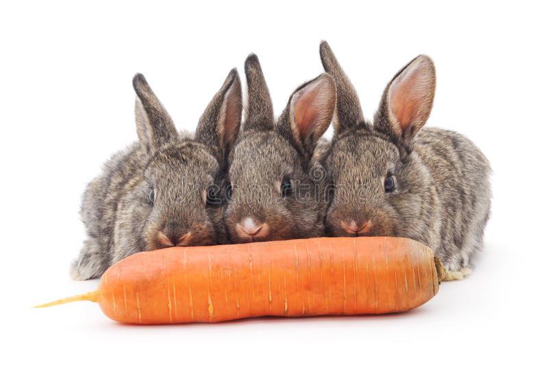 Conejos jovenes que comen zanahorias fotografía de archivo libre de regalías