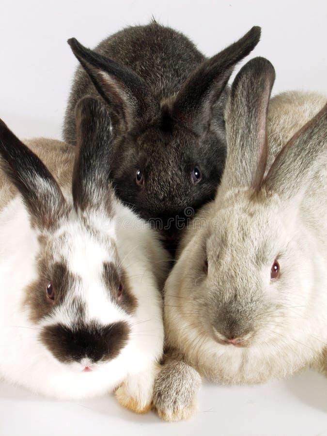 Conejos junto. foto de archivo