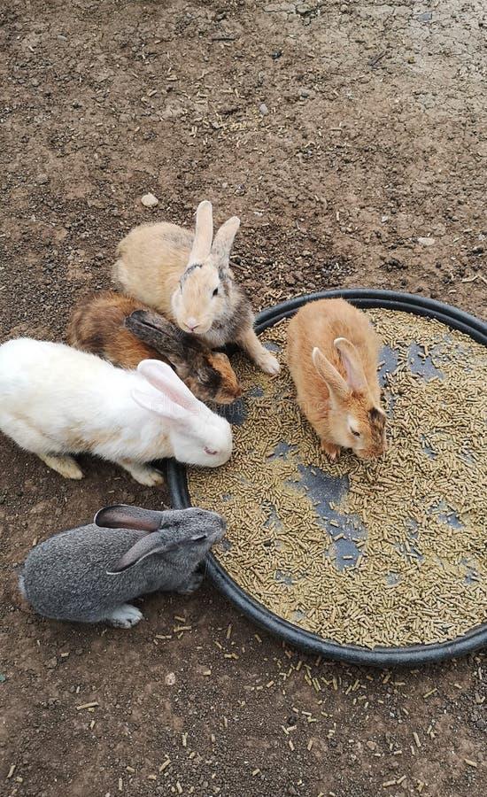 Conejos lindos de colores foto de archivo libre de regalías