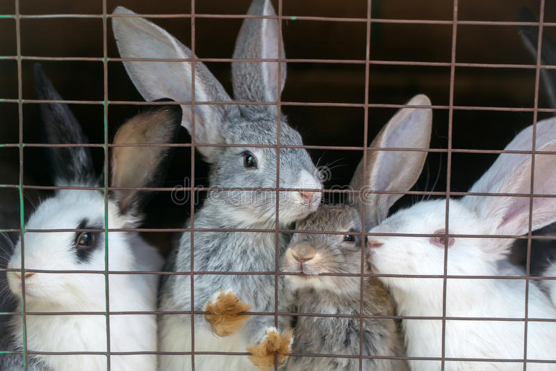 Conejos lindos en jaula fotos de archivo