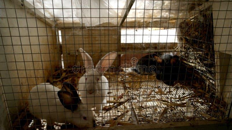 Conejos lindos en jaula del metal foto de archivo