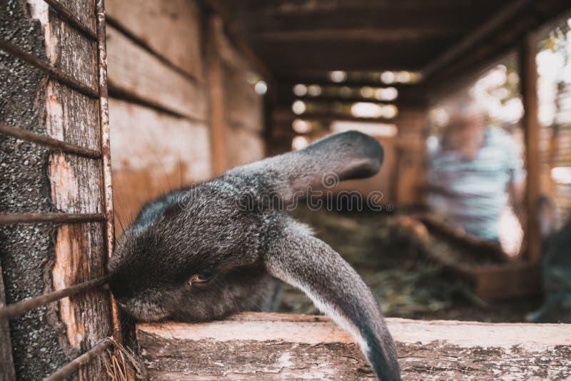 Conejos mullidos lindos en una jaula en la granja fotografía de archivo libre de regalías