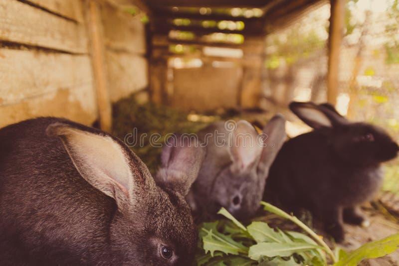 Conejos mullidos lindos en una jaula en la granja imagen de archivo