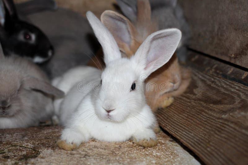 Conejos negros blancos grises en una jaula en la granja viva fotografía de archivo libre de regalías