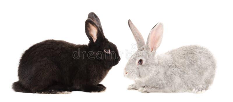 Conejos negros y grises fotos de archivo libres de regalías