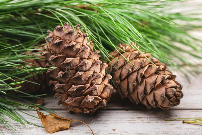Two cones of Siberian cedar pine. royalty free stock photo