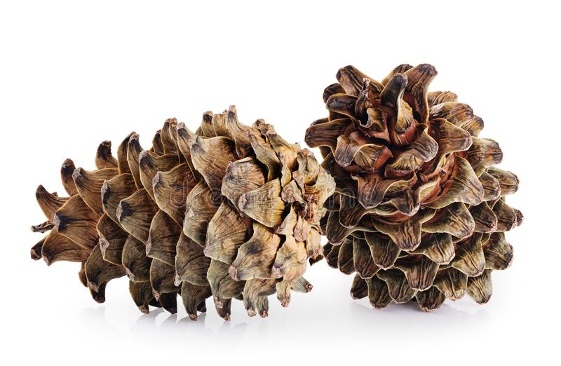 Cones of cedar pine isolated on white background. With clipping path royalty free stock photo