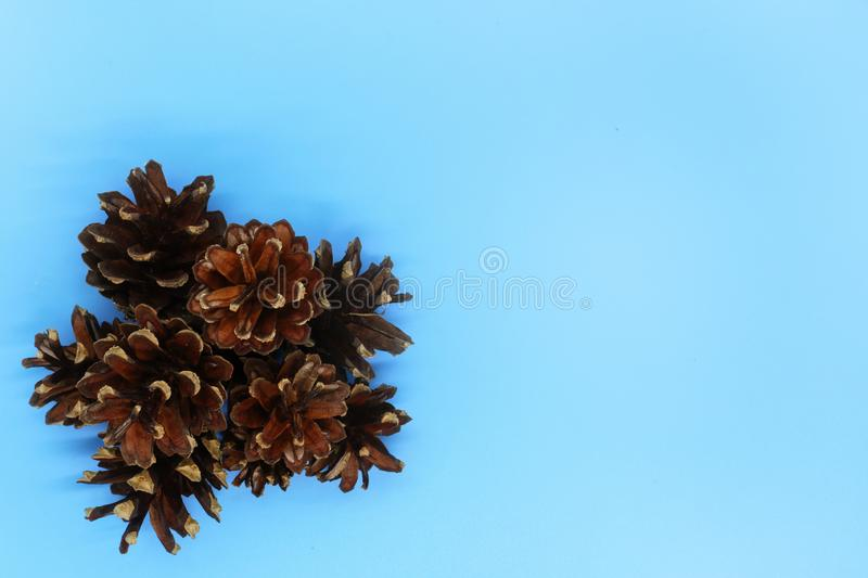 Cones close-up on a blue background, christmas background, new year card, place for text stock image