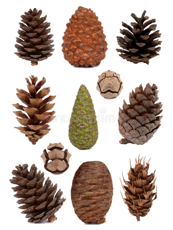 Free Cones Collection Royalty Free Stock Image - 16666046