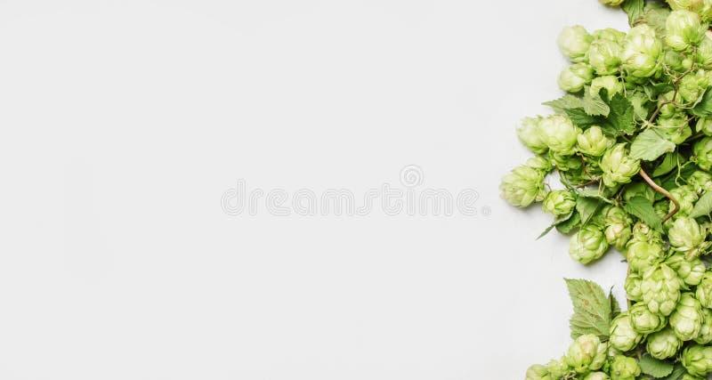 Cones de lúpulo verdes, fundo cinzento, vista superior imagem de stock royalty free