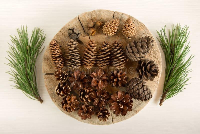 Cones diferentes da árvore conífera e dois ramos do pinho no fundo branco, vista superior foto de stock
