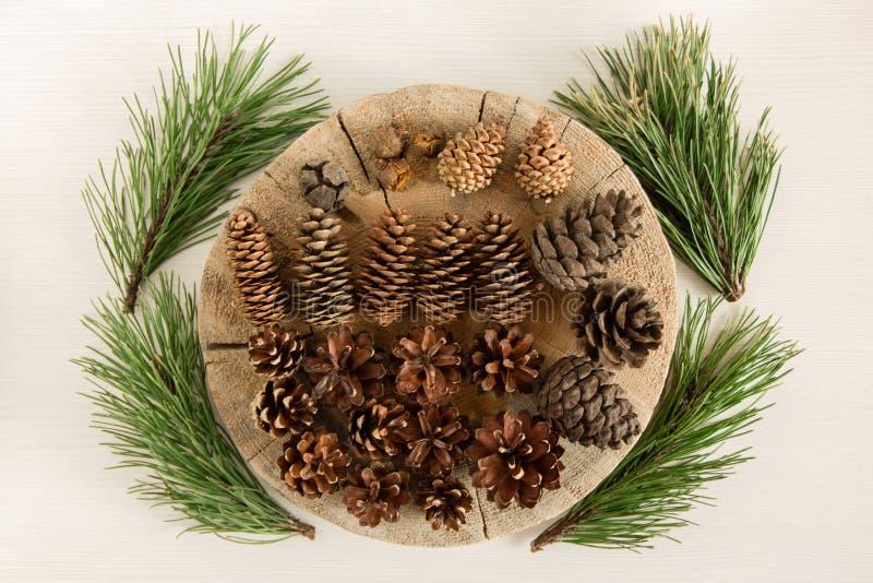 Cones diferentes da árvore conífera e quatro ramos do pinho no fundo branco, vista superior fotos de stock royalty free