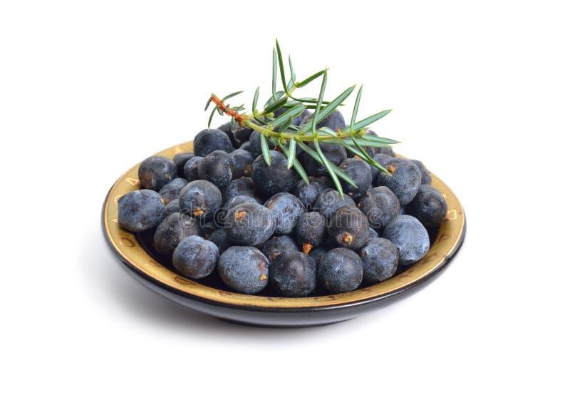 Cones e folhas de communis do juniperus isolados no fundo branco fotografia de stock royalty free