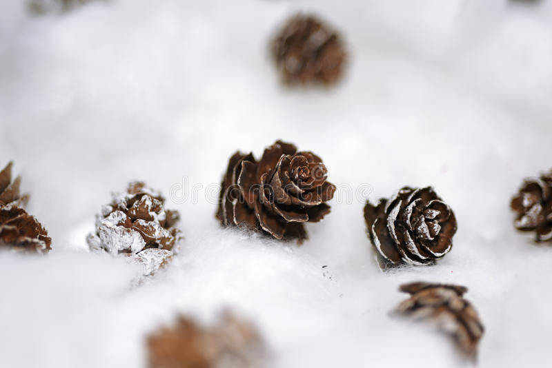 Cones in the snow. Macro photo of small decorative cones stock photos