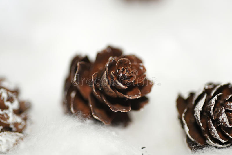 Cones in the snow. Macro photo of small decorative cones royalty free stock images