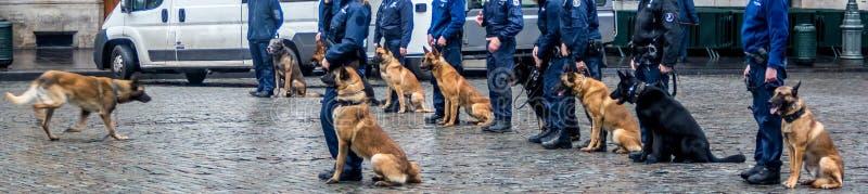 Conférence de chien Affichez et le dites Gardes de Bruxelles photo libre de droits