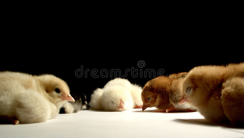 Download Conference.......(1) stock image. Image of sleep, zoology - 136527
