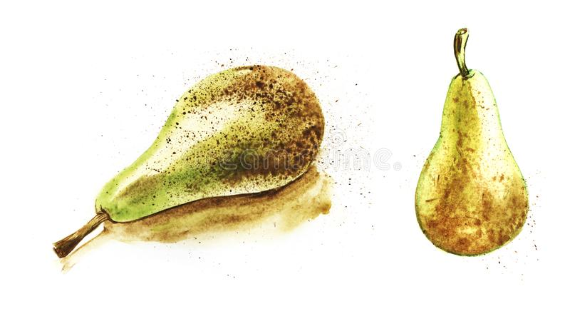Conferenza verde matura succosa della pera su un fondo bianco Metta di due illustrazioni disegnate a mano dell'acquerello di colo illustrazione di stock
