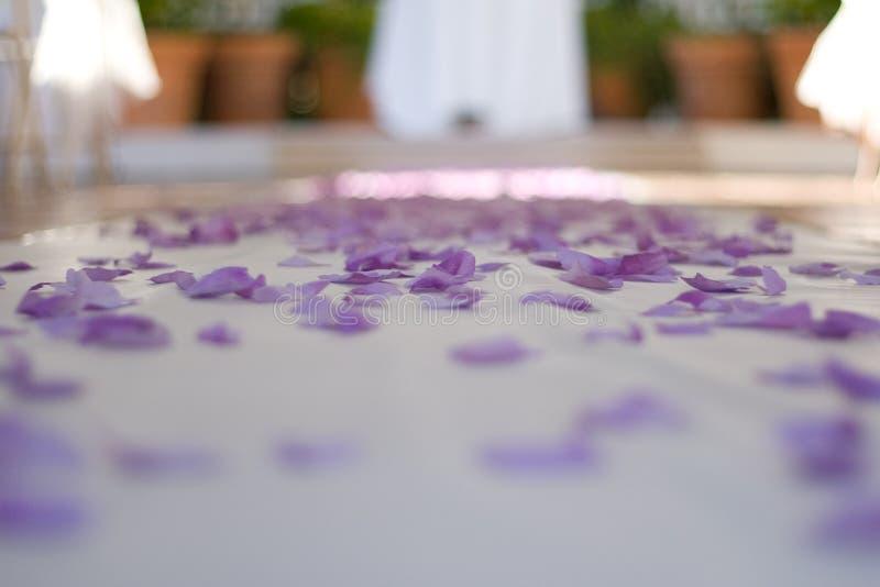 Confeti púrpura en el vector imágenes de archivo libres de regalías