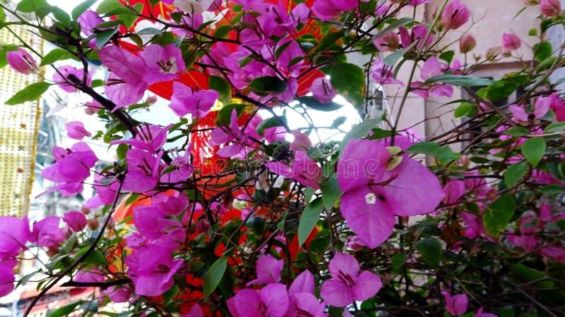 Confettis roses fleurissant au soleil image stock