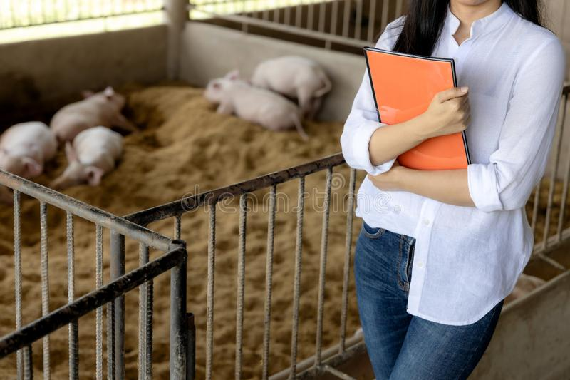 Confident farmer with notes for checking quality in hands in organic farm pig. Agriculture and livestock industry stock photography