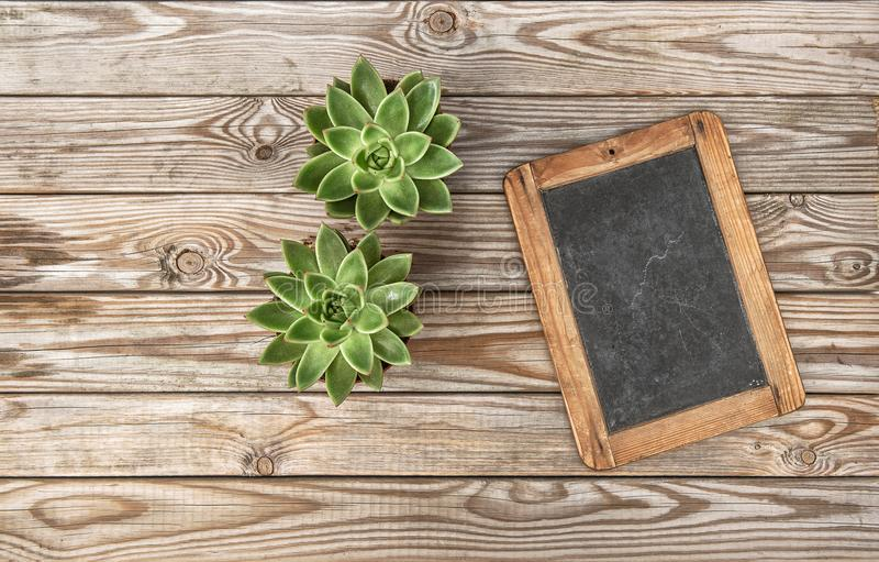 Configuração de madeira do plano do fundo do quadro suculento do vintage imagens de stock royalty free