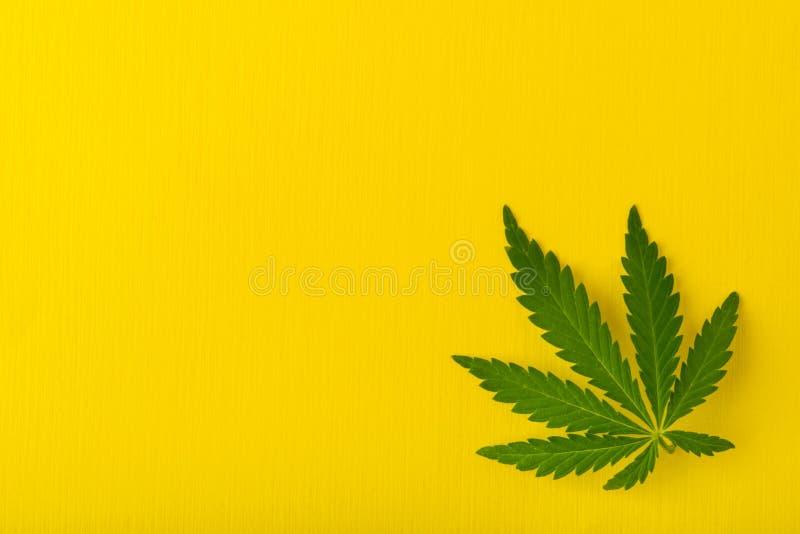 Configuração lisa da opinião superior da folha da marijuana foto de stock royalty free