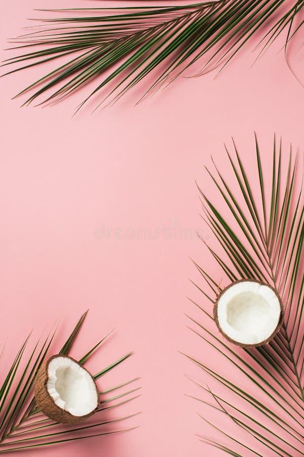 Configuração lisa tropical com folhas de palmeira e coco imagens de stock