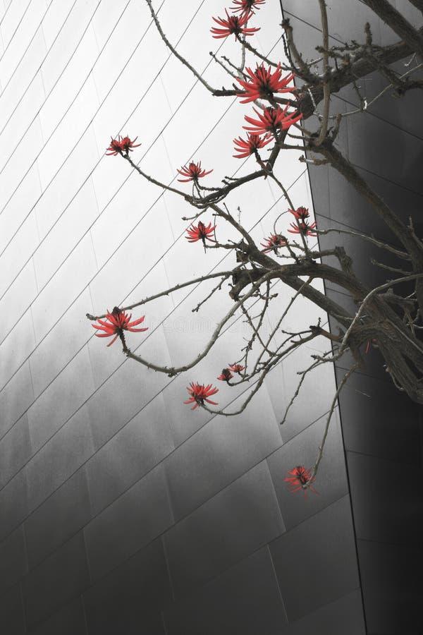 Configuración abstracta y plantas imagen de archivo libre de regalías