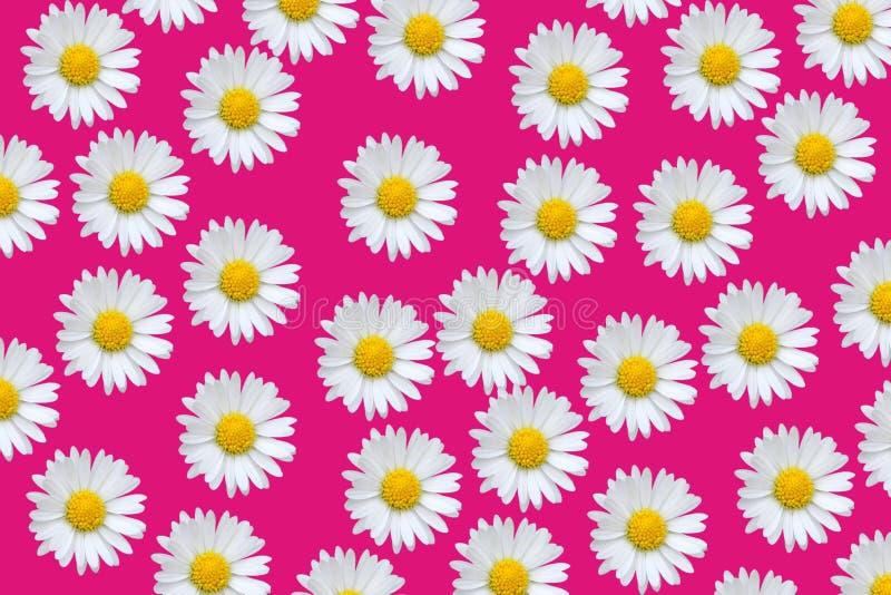 Configuration colorée avec des fleurs de marguerite photographie stock