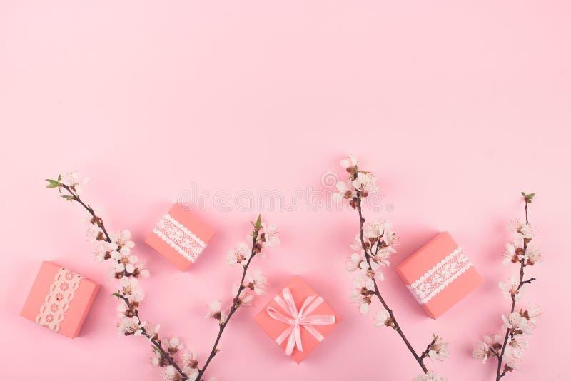 Configuration d'appartement avec les boîte-cadeau roses et les fleurs de floraison de Sakura de cerise sur le fond en pastel Fond photos stock