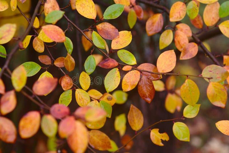Configuration d'automne avec les lames rouges, vertes, et de jaune photographie stock