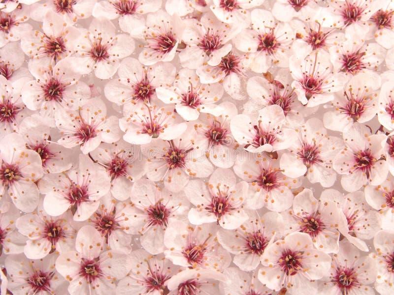 Configuration de fleurs de plomb II photo libre de droits