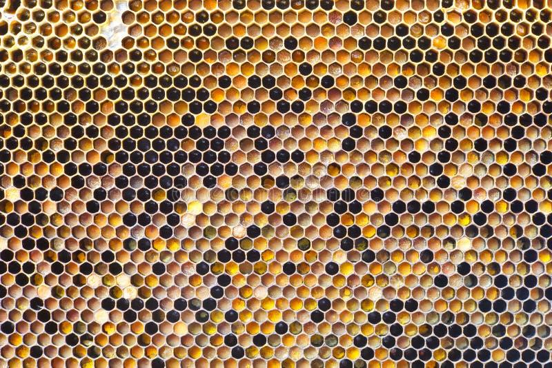 Configuration de nid d'abeilles photographie stock