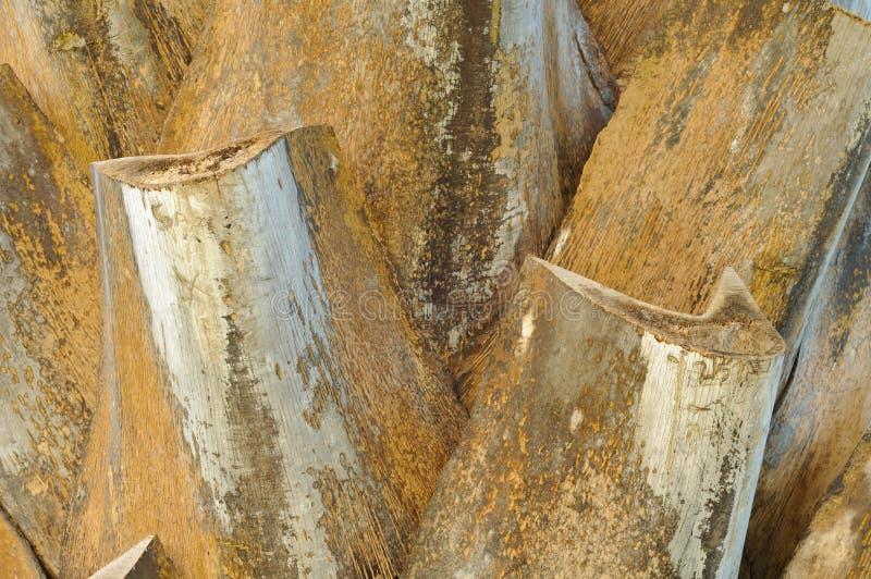 Configuration de palmier photo libre de droits