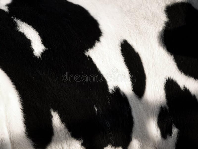 Configuration de vache image stock