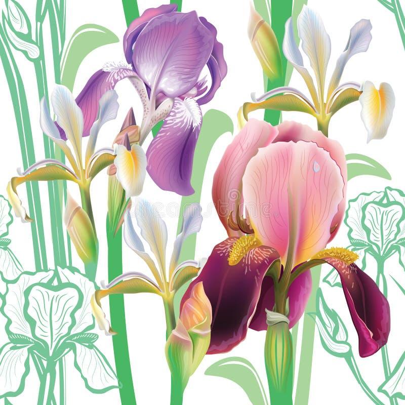 Configuration florale sans joint avec des iris illustration stock