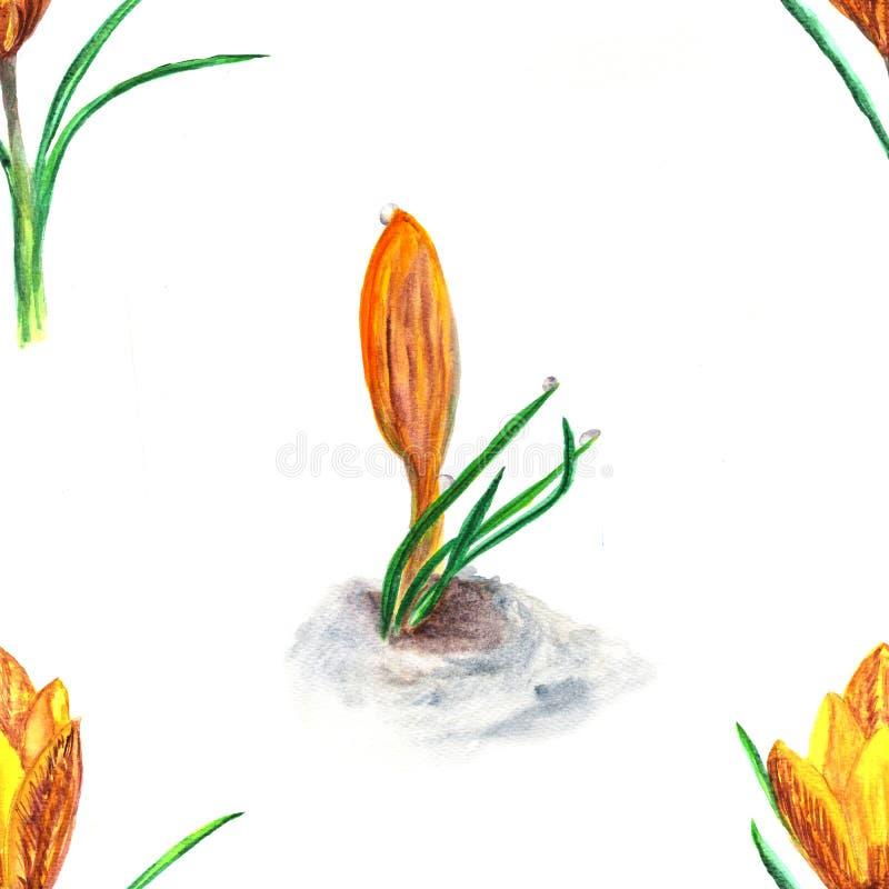 Configuration florale sans joint Illustration d'aquarelle de fleur de ressort de crocus illustration libre de droits