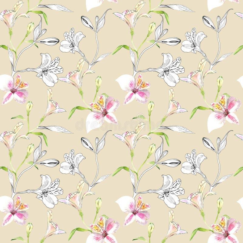 Configuration florale sans joint Modèle avec des fleurs de graphiques d'aquarelle et d'encre sur le fond beige Alstroemeria seaml illustration de vecteur