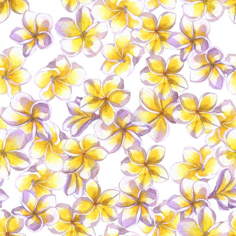 Configuration florale tropicale L'aquarelle peinte fleurit le plumeria Frangipani exotique blanc de fleur répétant le contexte illustration stock