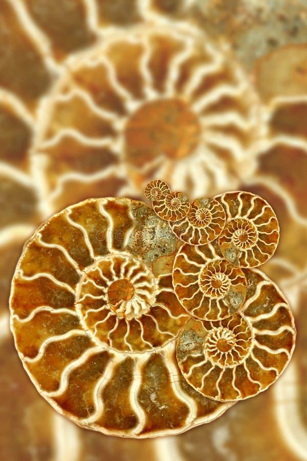 Configuration fossile artistique photos stock